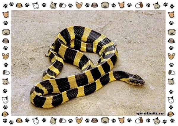 Виды-змей-описание-классификация-место-в-экосистеме-26