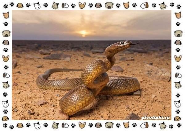 Виды-змей-описание-классификация-место-в-экосистеме-27