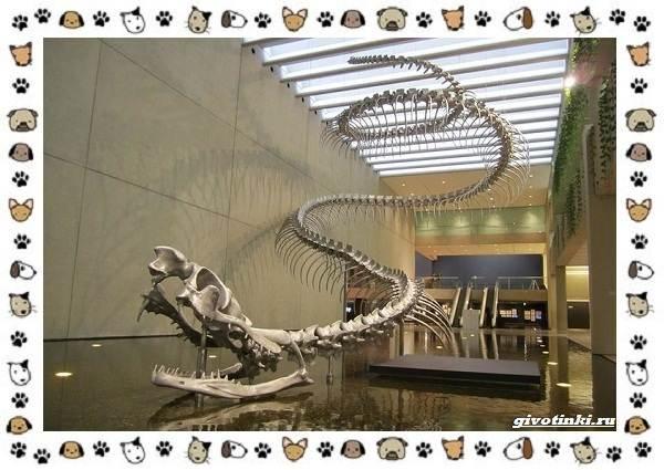Виды-змей-описание-классификация-место-в-экосистеме-3