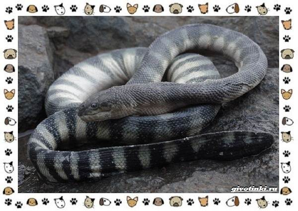 Виды-змей-описание-классификация-место-в-экосистеме-32