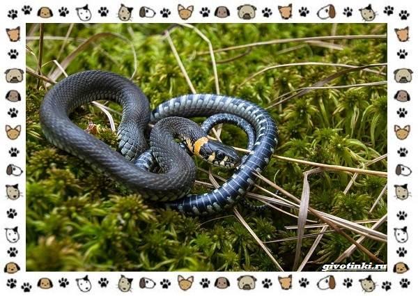 Виды-змей-описание-классификация-место-в-экосистеме-34