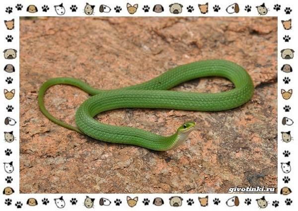 Виды-змей-описание-классификация-место-в-экосистеме-36