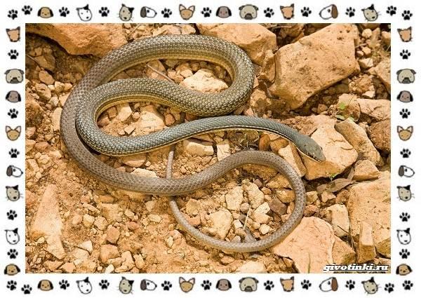 Виды-змей-описание-классификация-место-в-экосистеме-38