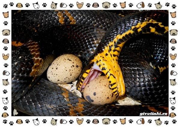 Виды-змей-описание-классификация-место-в-экосистеме-39