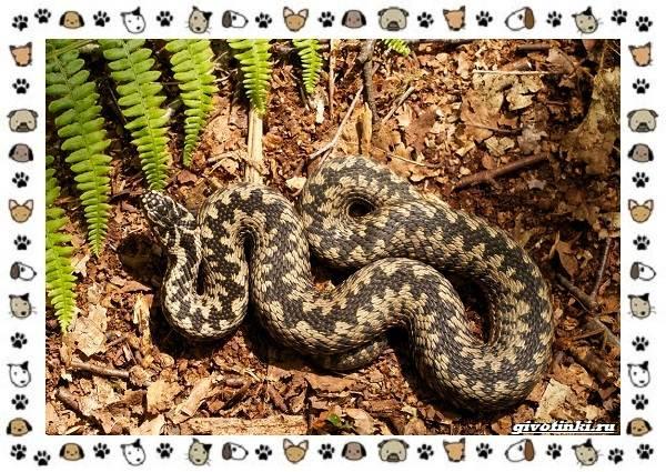 Виды-змей-описание-классификация-место-в-экосистеме-4