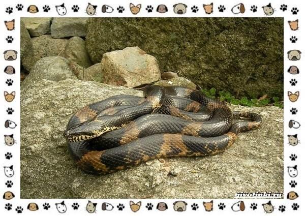 Виды-змей-описание-классификация-место-в-экосистеме-40