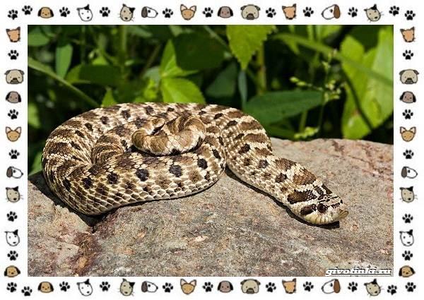 Виды-змей-описание-классификация-место-в-экосистеме-41