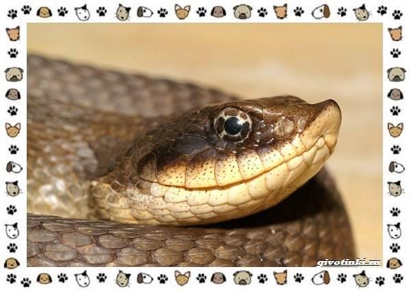 Виды-змей-описание-классификация-место-в-экосистеме-42