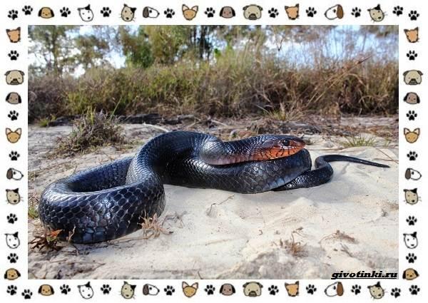 Виды-змей-описание-классификация-место-в-экосистеме-45