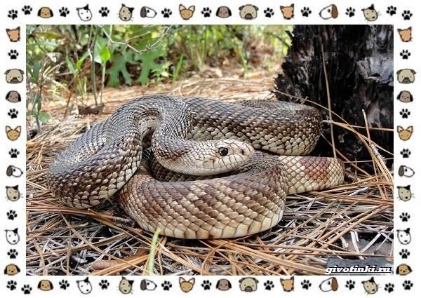 Виды-змей-описание-классификация-место-в-экосистеме-46