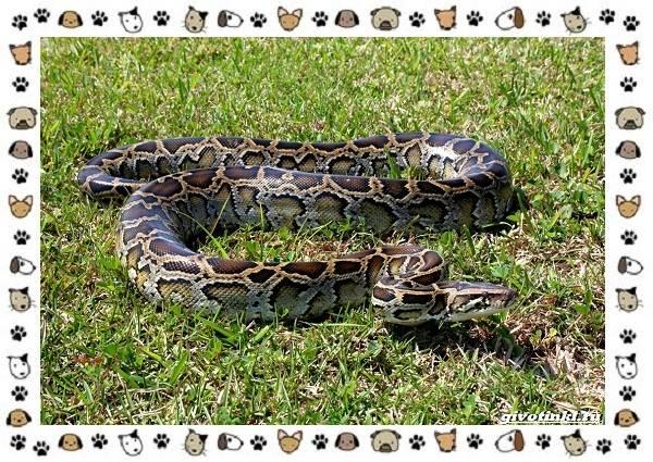 Виды-змей-описание-классификация-место-в-экосистеме-49