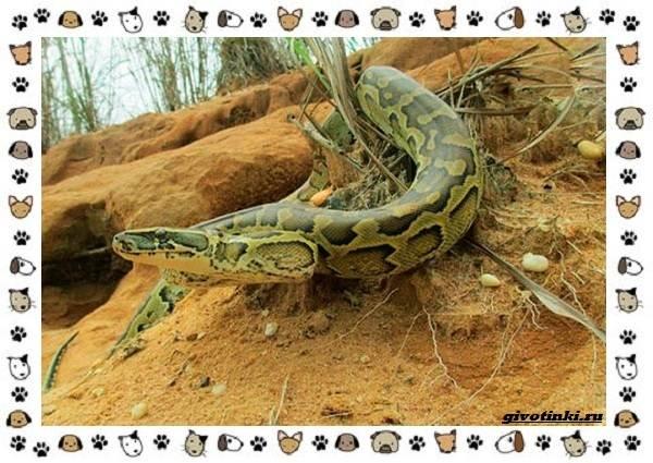 Виды-змей-описание-классификация-место-в-экосистеме-50