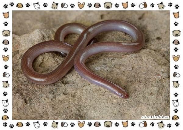 Виды-змей-описание-классификация-место-в-экосистеме-53
