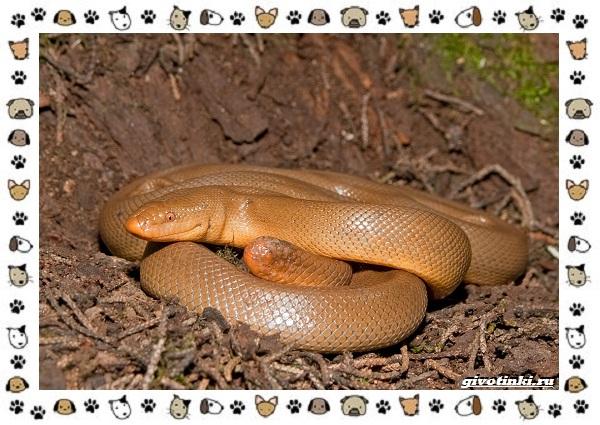 Виды-змей-описание-классификация-место-в-экосистеме-55-2