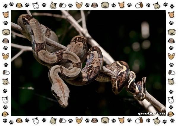 Виды-змей-описание-классификация-место-в-экосистеме-56