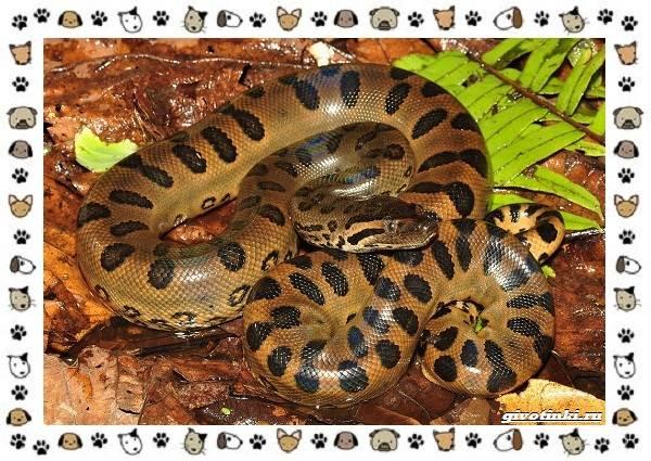 Виды-змей-описание-классификация-место-в-экосистеме-57
