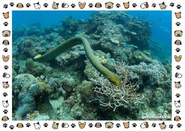 Виды-змей-описание-классификация-место-в-экосистеме-58