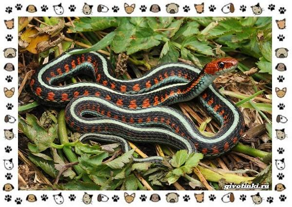Виды-змей-описание-классификация-место-в-экосистеме-59
