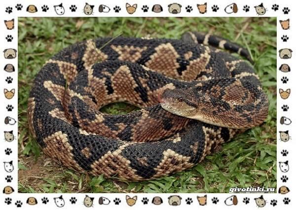 Виды-змей-описание-классификация-место-в-экосистеме-7