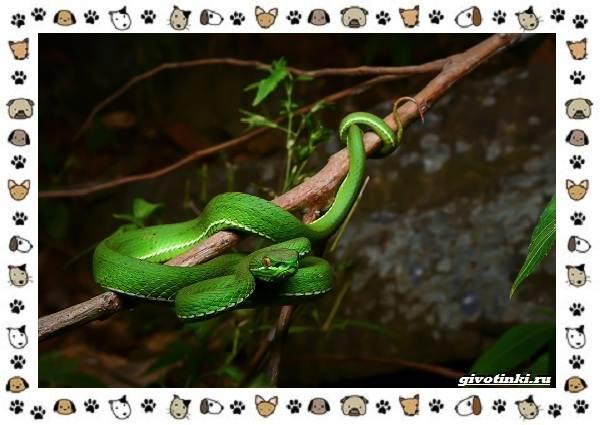 Виды-змей-описание-классификация-место-в-экосистеме-9