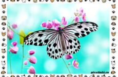 Виды бабочек, их жизненные циклы и чудеса перерождений