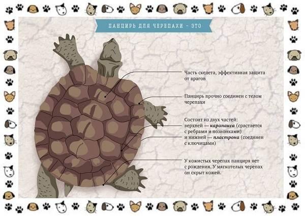 Виды-черепах-водных-и-сухопутных-1