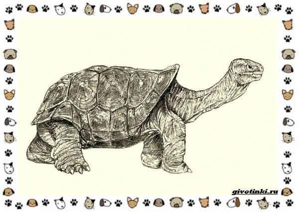 Виды-черепах-водных-и-сухопутных-10