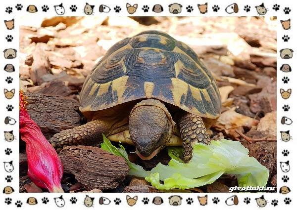 Виды-черепах-водных-и-сухопутных-11