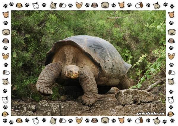 Виды-черепах-водных-и-сухопутных-12