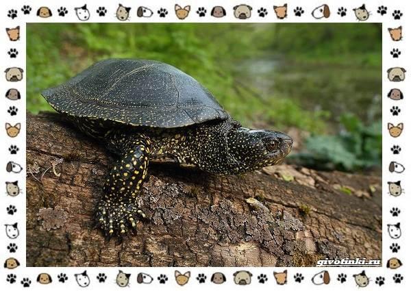 Виды-черепах-водных-и-сухопутных-14