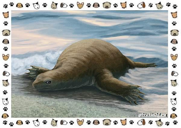 Виды-черепах-водных-и-сухопутных-2