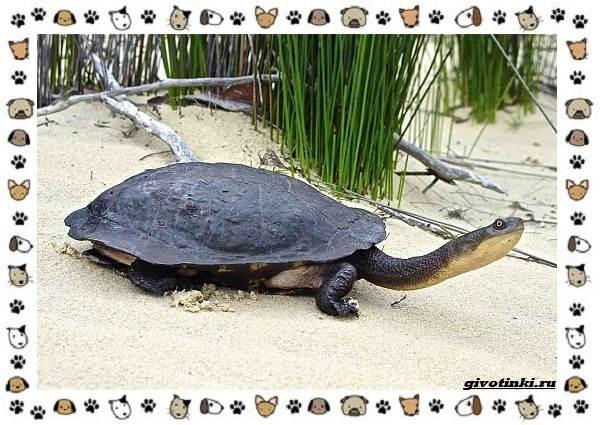 Виды-черепах-водных-и-сухопутных-20