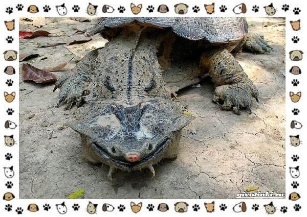 Виды-черепах-водных-и-сухопутных-21