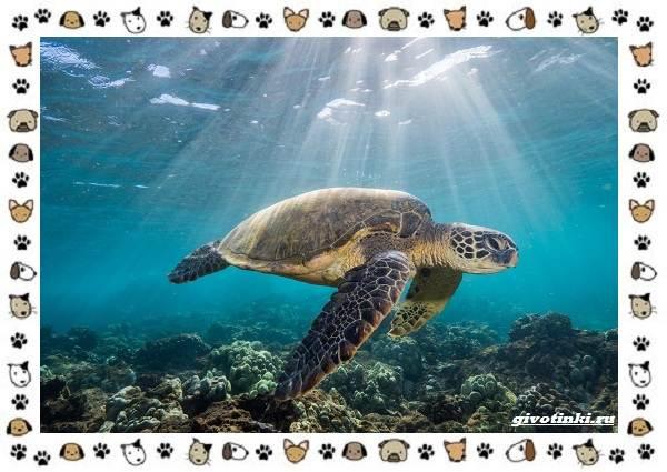 Виды-черепах-водных-и-сухопутных-25