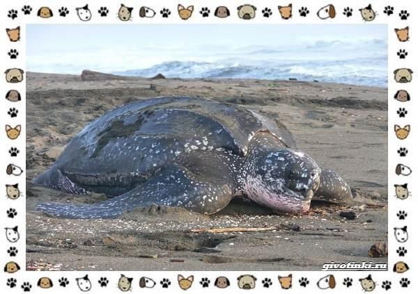 Виды-черепах-водных-и-сухопутных-26-1