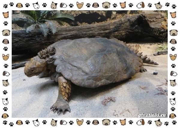 Виды-черепах-водных-и-сухопутных-26