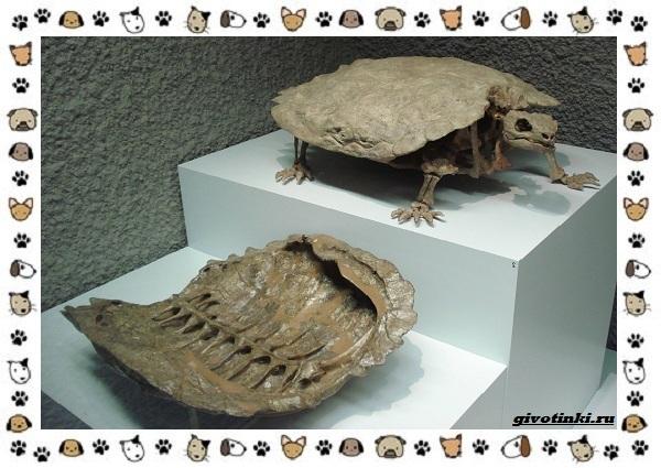 Виды-черепах-водных-и-сухопутных-27