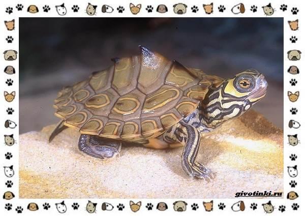 Виды-черепах-водных-и-сухопутных-28