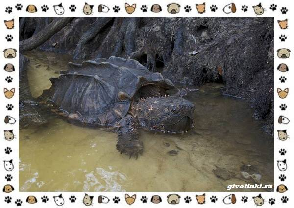 Виды-черепах-водных-и-сухопутных-32
