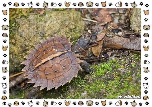 Виды-черепах-водных-и-сухопутных-35