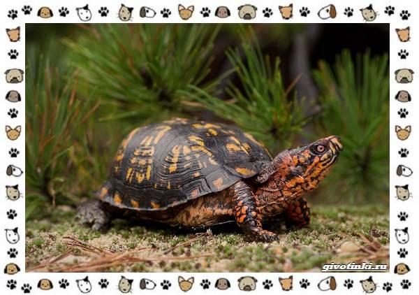 Виды-черепах-водных-и-сухопутных-38