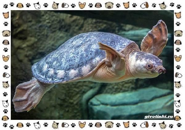 Виды-черепах-водных-и-сухопутных-39
