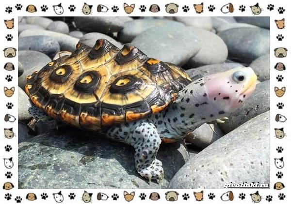 Виды-черепах-водных-и-сухопутных-41