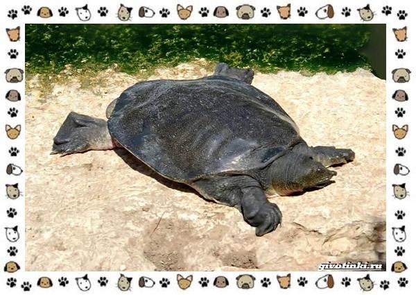 Виды-черепах-водных-и-сухопутных-8