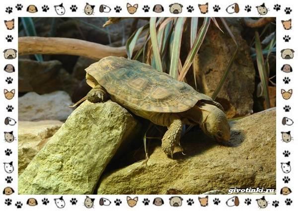 Виды-черепах-водных-и-сухопутных-9