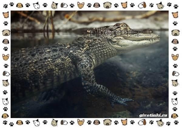 Виды-крокодилов-описание-особенности-и-среда-обитания-1