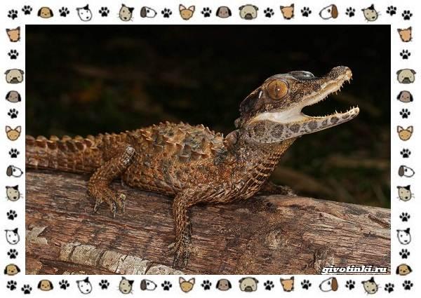 Виды-крокодилов-описание-особенности-и-среда-обитания-22
