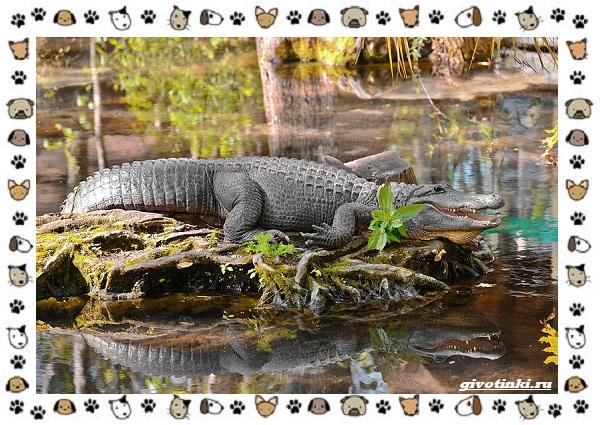 Виды-крокодилов-описание-особенности-и-среда-обитания-29