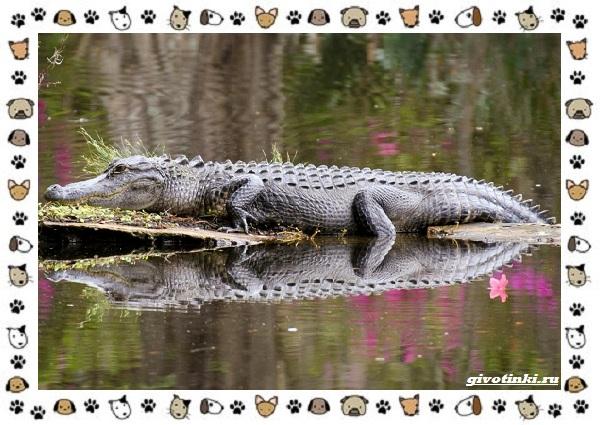 Виды-крокодилов-описание-особенности-и-среда-обитания-32