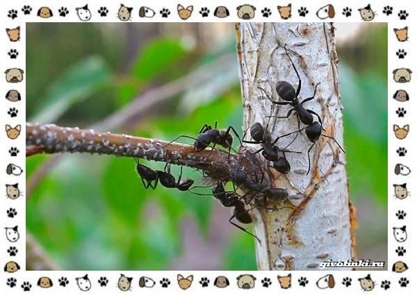 Виды-муравьёв-их-особенности-образ-жизни-и-среда-обитания-10
